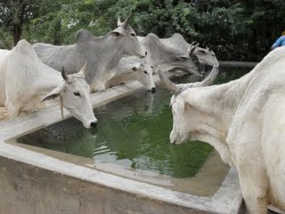 Water is Life - Ashram Drought Relief