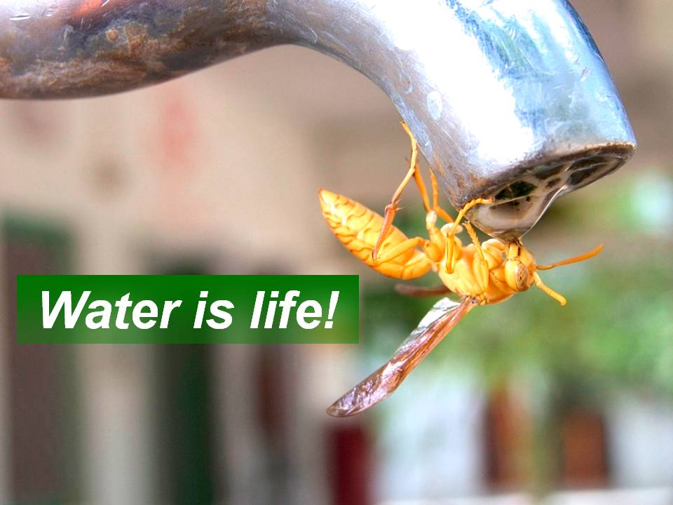Water is life!