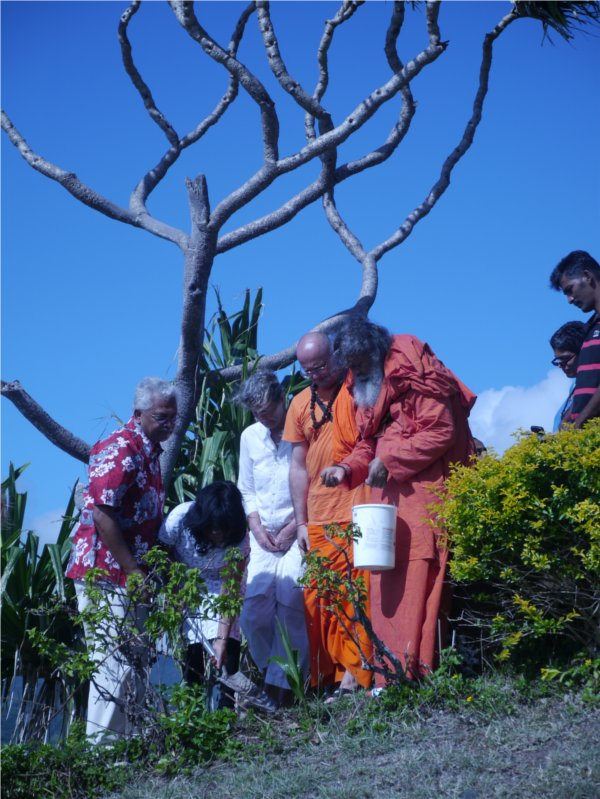 Peace Tree Planting in Fiji