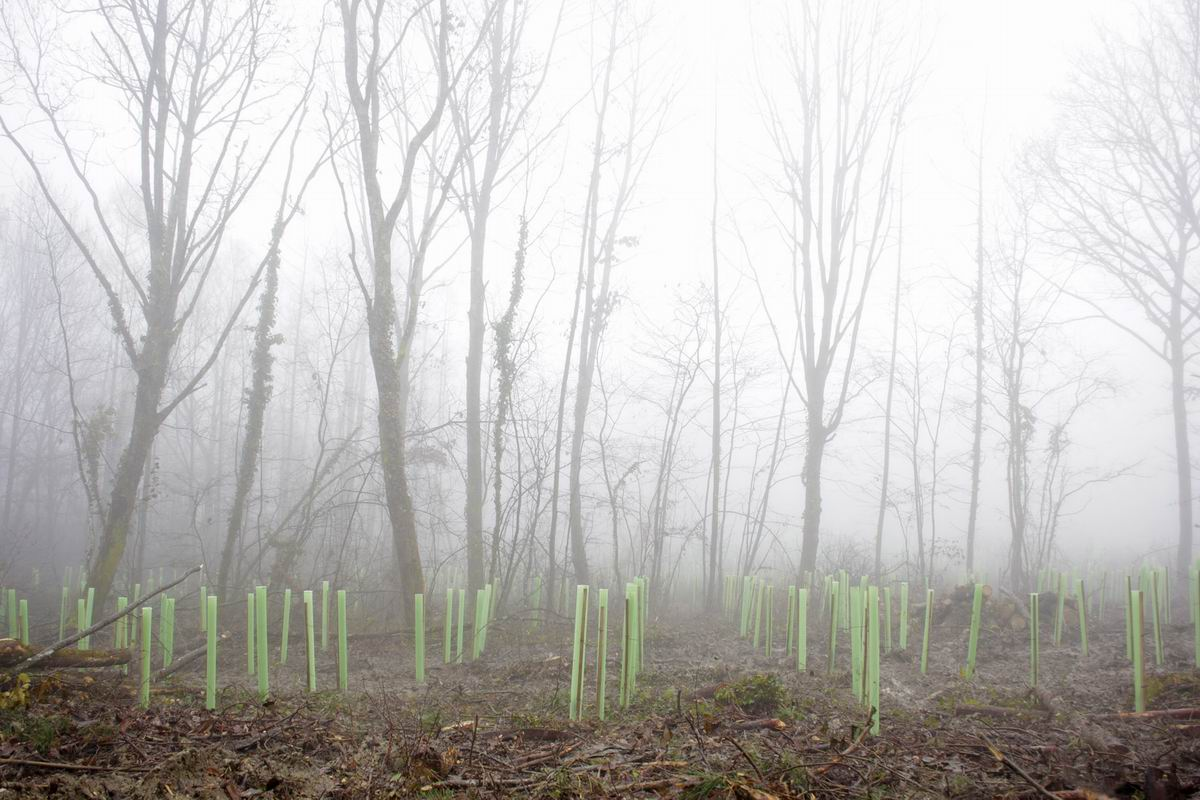 Planting of a thousand young trees in the Žumberak Nature Park 22 November 2014