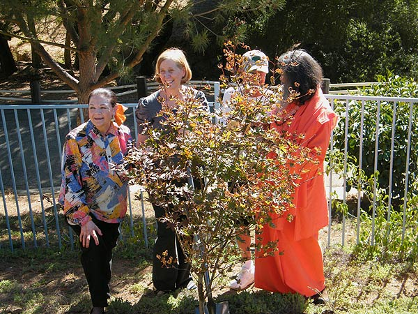 His Holiness Swamiji plants a peace tree with US anti-war activist Cindy Sheehan, founder of Peace Park Fred Segal and President of United Nations Association California Norma Foster